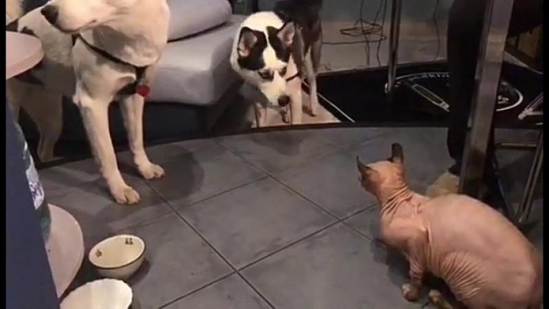 Знакомство ( Кайя, Келли с котом)