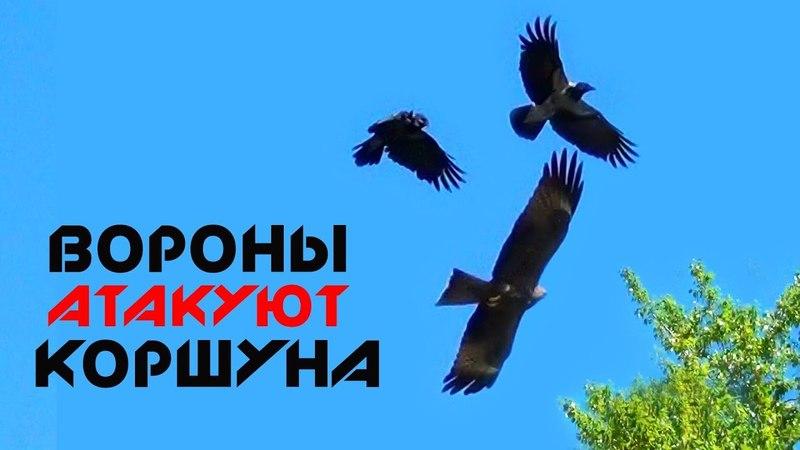Вороны атакуют Коршуна в небе | Воздушные бои