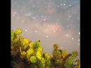 Таймлапс кактусы и центр Млечного Пути
