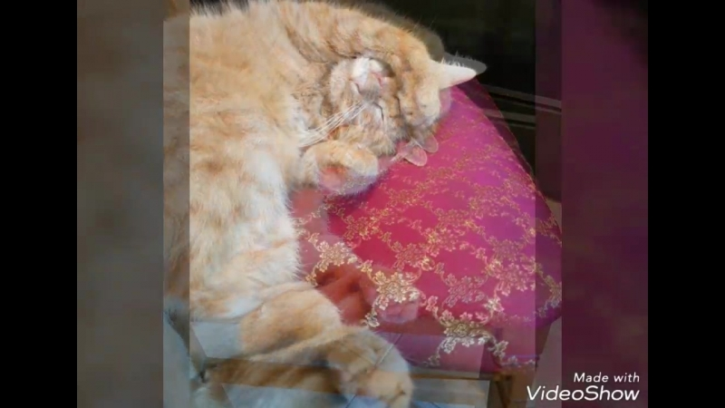 Не дают поспать коту