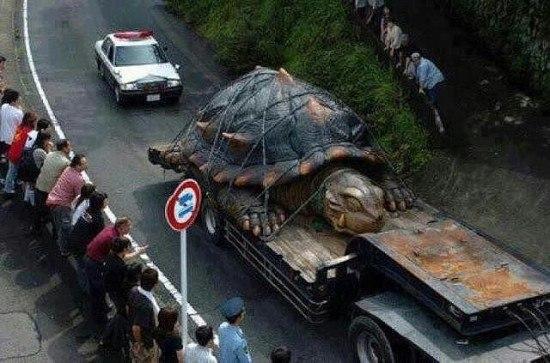 Найбільша черепаха