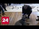 Вучич подарил Путину щенка Пашу Россия 24