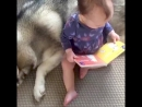Это любовь с первых минут. Когда собаки лучше любой няни для ребенка