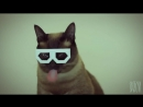 DUBSTEP_HIPSTER_CATStereo