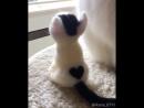 Кот - это любовь
