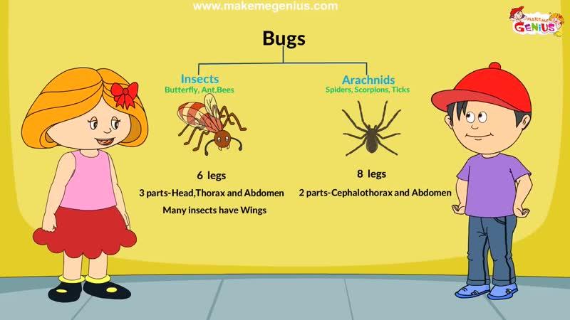 Insects and arachnids. Обучающий мультфильм про насекомых и арахнид.