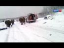 Россия 24 Пятилетняя девочка погибла в массовой аварии под Заполярным Россия 24