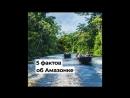 5 фактов об Амазонке
