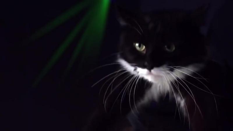 Я теперь поняла чем коты наши занимаются дома когда нас дома нет :0