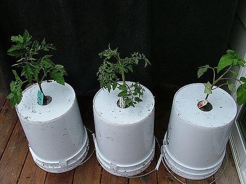 с ног на голову или овощной переворот ищите новые необычные решения для своего огородаовощи в верх ногами - как вам такая идея этот способ можно отнести к еще одной разновидности вертикального