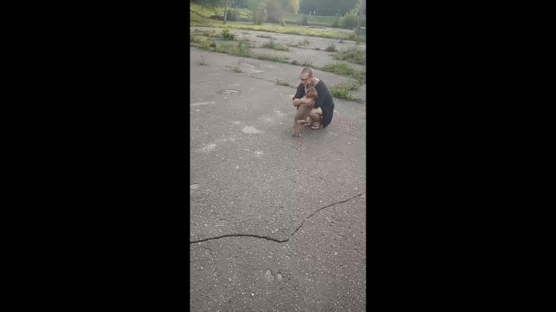 Анатолий Доберманов - Live