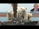 Покорение арктики: Дымящий флот: Красим белых медведей в бурых.