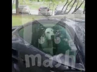 Далматинцев закрыли в автомобиле порше в москве