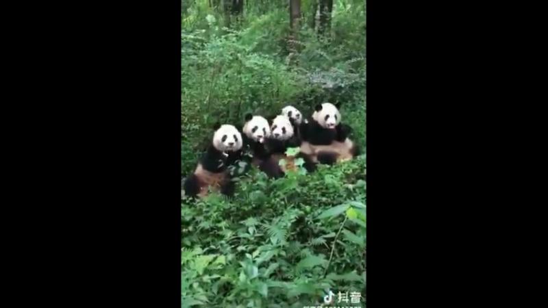 Какие же они милые ссорятся из-за бамбука)