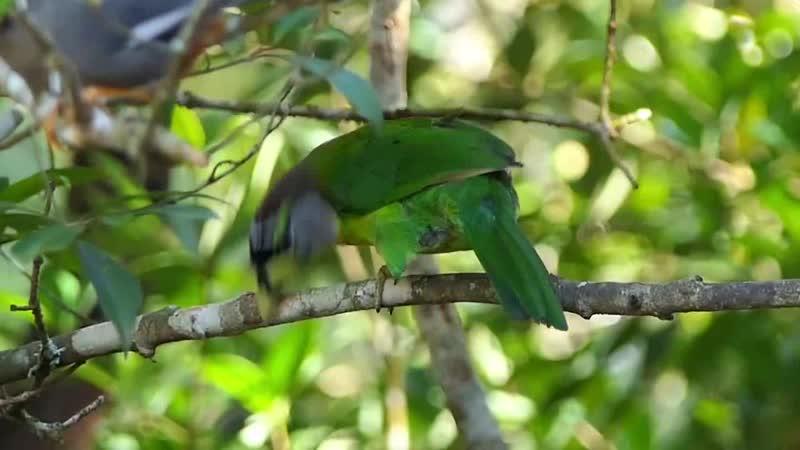 Красочные птицы Малайзии