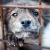 """ВГОО Общество защиты бездомных животных """"Дора"""""""