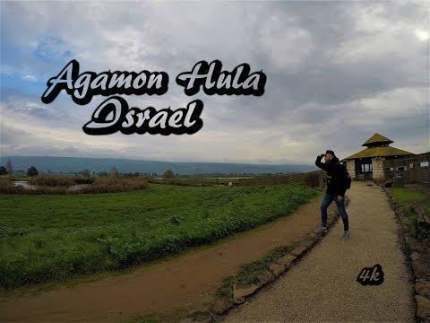 Agamon Hula, Israel HD 4K