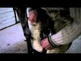 Как забивают подковы в копыта лошадей...