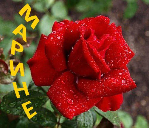 Марине цветы