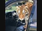 Kiki Челендж от Тигра