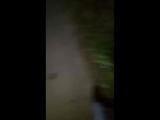 Злата Суркова - Live