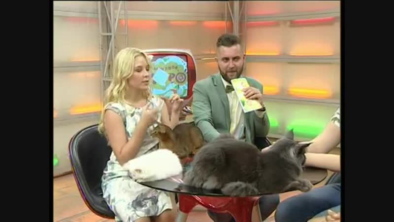 Интервью Клуб любителей кошек Лигра