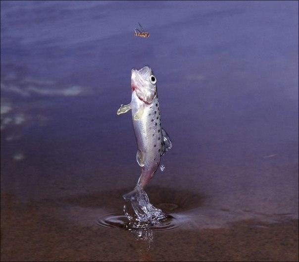 Рыбалка - об этике