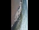 Пляж в Янтарном имеет Голубой флаг за экологически чистый песок