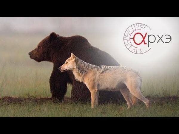 Ясон Бадридзе и Валентин Пажетнов Хищные млекопитающие возвращение в природу