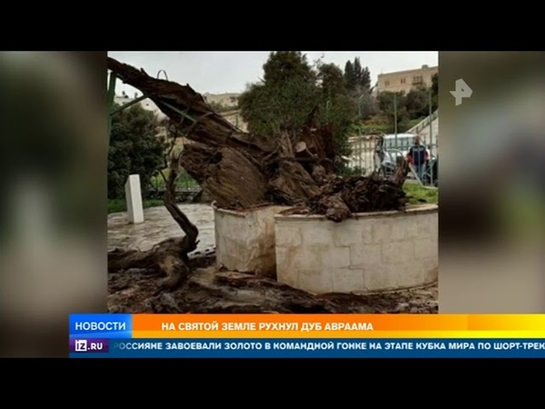 В Палестине рухнул Дуб Авраама