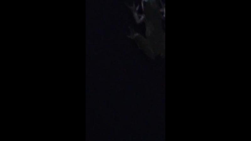 Эта лягушка съела светлячка но он продолжил светиться у нее в животе Самое странное что я видел сегодня смотреть онлайн без регистрации