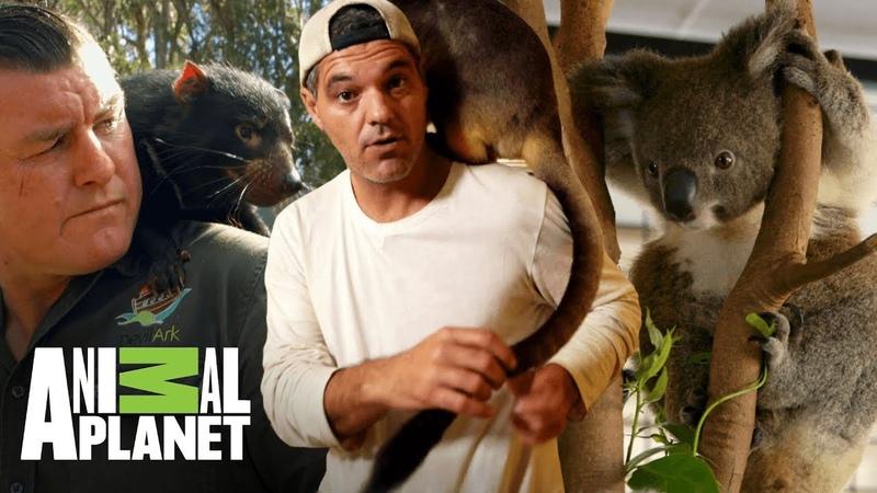 Aventuras con Wild Frank: Animales rescatados | Animal Planet