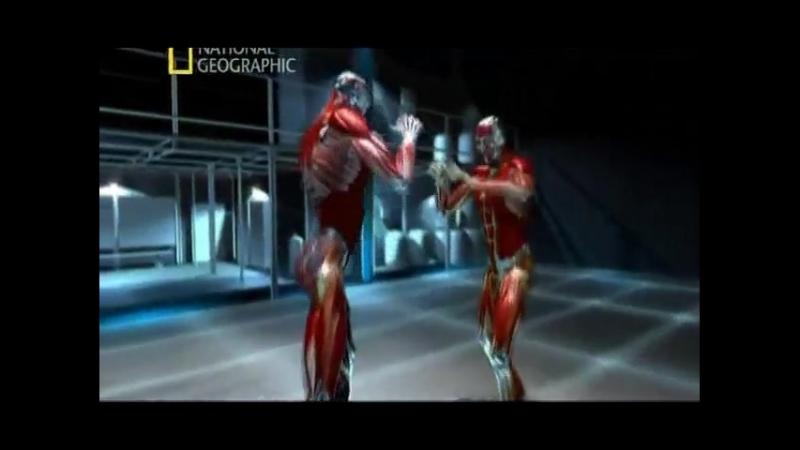 Наука рукопашного боя Смешанные боевые искусства