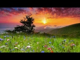 ACOUSTIC GUITAR MUSIC RELAXING SUMMER NATURE SOUND CHILL EMOTIONS MEDITATION STRESS RELIEF MUSIC