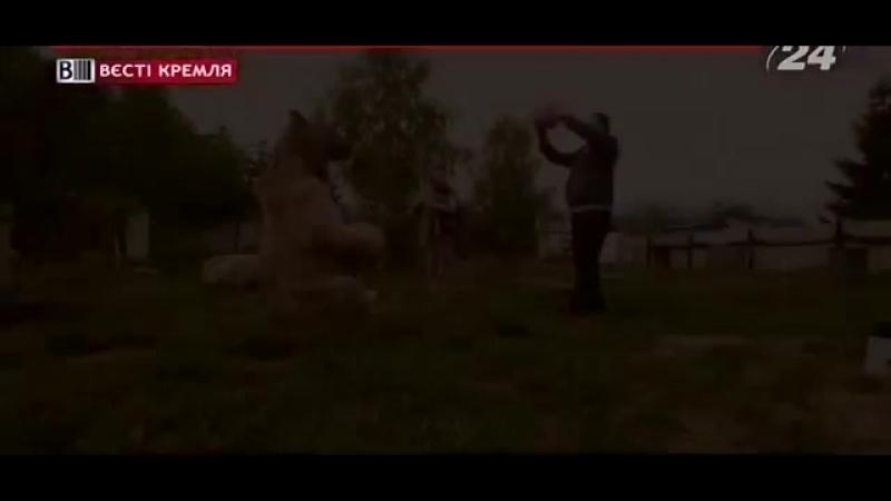 [v-s.mobi]ДОБРЫЙ Медведь Степан у Пантелеенко ДОМА стал КИНОЗВЕЗДОЙ.mp4