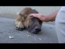 Мужчина просто погладил пса по голове. Реакцию животного не описать словами!