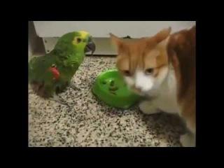 Хам-попугай и справедливый кот
