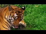 Удивительный мир. Красота диких животных