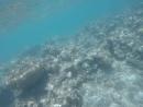 Кораллы и его обитатели в Эйлатском заливе. Красное море. Израиль. 4 июня 2018