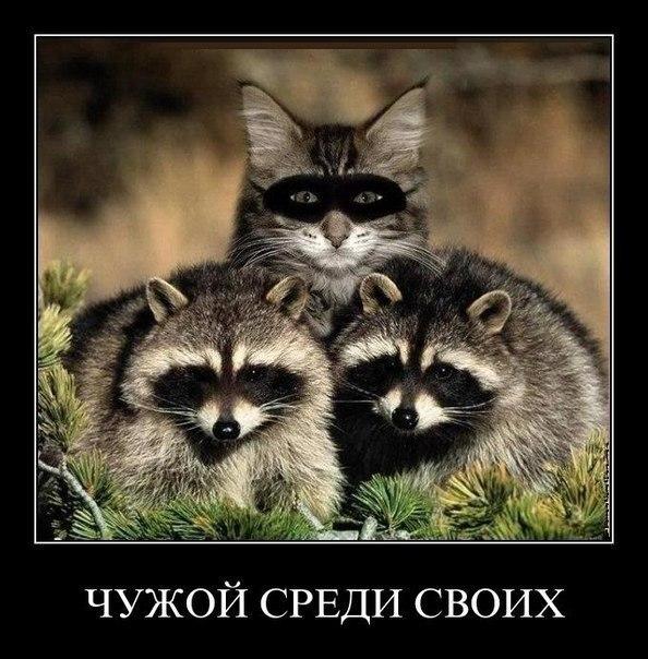 http://cs616722.vk.me/v616722419/5aca/8ms8MfipZgs.jpg