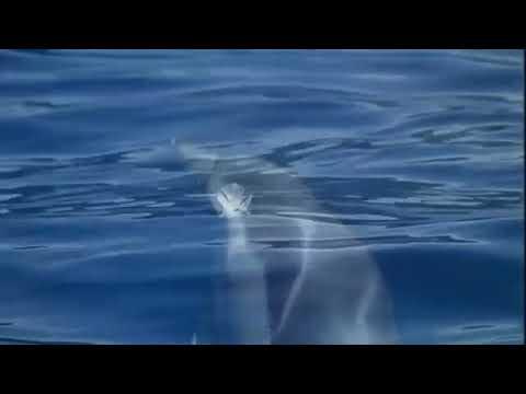 Дельфин с собака настоящая дружба!