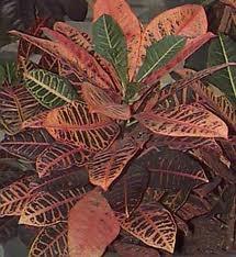зодиак - Магия растений. Магические свойства растений. Обряды и ритуалы. Амулеты и талисманы из растений.  5YeLrRT5A_w