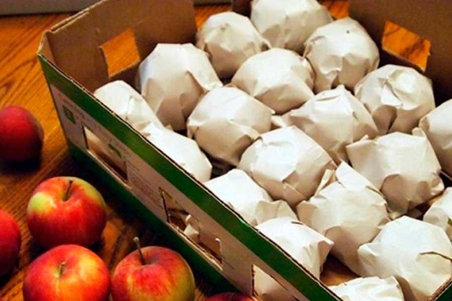 Можно хранить яблоки я деревянных или картонных ящиках