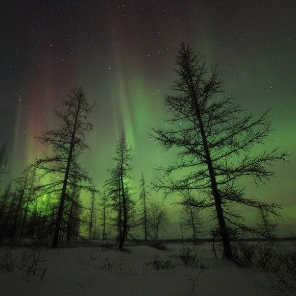 Северное сияние в окрестностях Нового Уренгоя, октябрь 2014 года. Автор фото: Камиль Нуреев ( Доброй ночи!