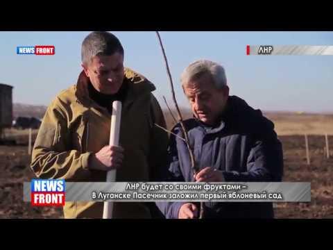 ЛНР будет со своими фруктами – В Луганске Пасечник заложил первый яблоневый сад