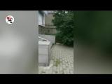 2_убитых_в_пыль_наркозомби_бродят_по_двору._Real_video_720P.mp4