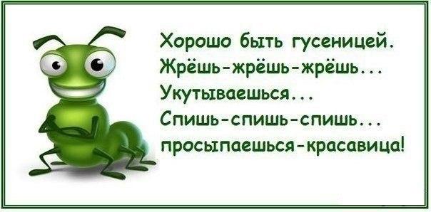 http://cs407816.vk.me/v407816991/7dba/-ziVIt-sB4w.jpg
