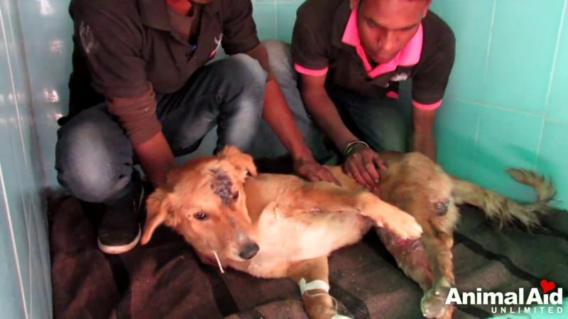 Раненный пёс, сбитый машинной, лежал на обочине и умирал. Помощь подоспела в последний момент