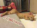 Приколы с котами СМЕШНАЯ ОЗВУЧКА ЖИВОТНЫХ Самое смешное видео в мире от DOMI SHOW