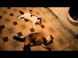 Кошкам дали валерьянку-одна из них не поняла, как кайф ловить...поэтому мешает другой